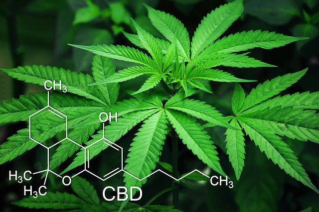 Medical Marijuana Dispensary – What is it?